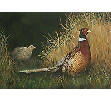Pheasants in Field Photographic Print
