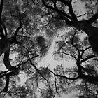 Scary Trees- Pimpala Track Stringybarks by Ben Loveday