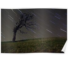 Tree with stars Poster