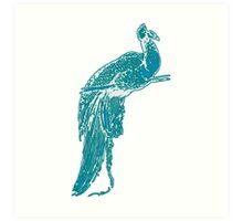 Peacock Illustration in Turquoise Art Print