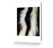 A SKUNK Greeting Card