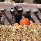 Southwest Autumn  by Denice Breaux