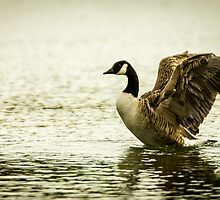 Rother Valley Goose by elfcall