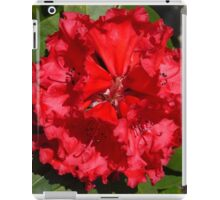 Red Rhododendron, Emu Valley, Tasmania iPad Case/Skin