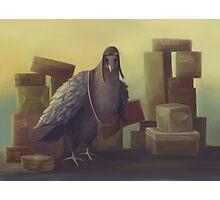 Messenger-pigeon Photographic Print