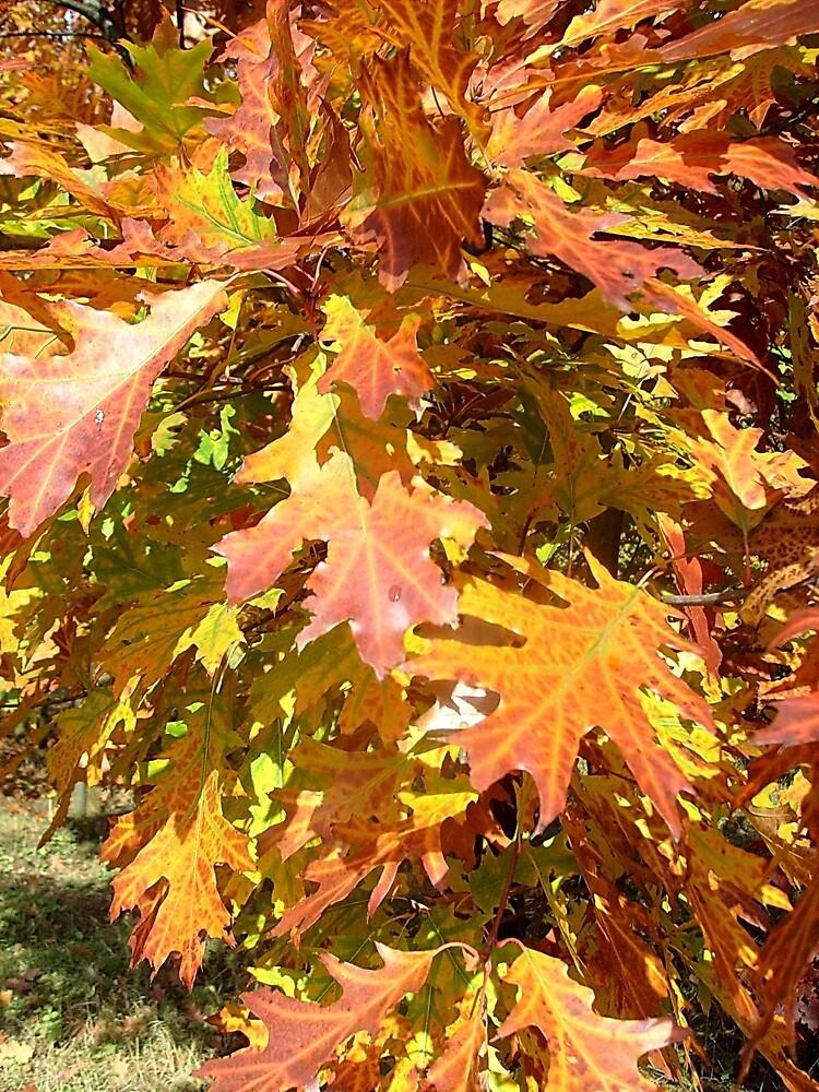 Hello Autumn! by Ana Belaj
