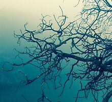 Tree in fog at Cataract Gorge Launceston Tasmania by fantasytripp