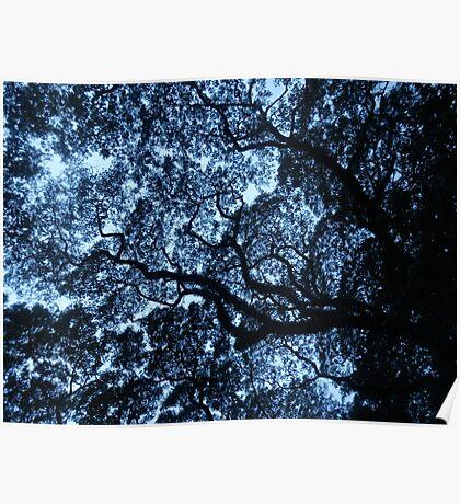 Fractal tree Poster