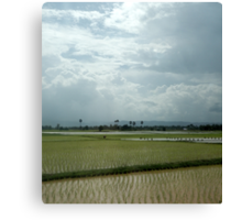 Cambodian paddy fields Canvas Print