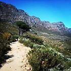 Table Mountain , South Africa by cocotessa