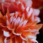 October Dahlia by Sue Morgan