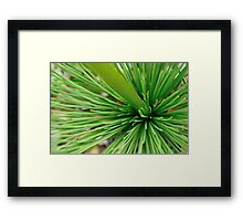 porcupine in green Framed Print