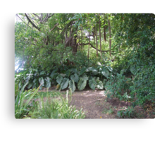 St Kitt jungle Canvas Print