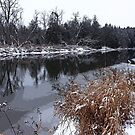 Touch Of Winter II by Debbie Oppermann