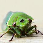 It's just not cricket! by Karen Tregoning