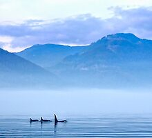 Three Killer whales in mountain landscape  by travel4pictures