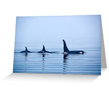 Three Killer whales with huge dorsal fins Greeting Card