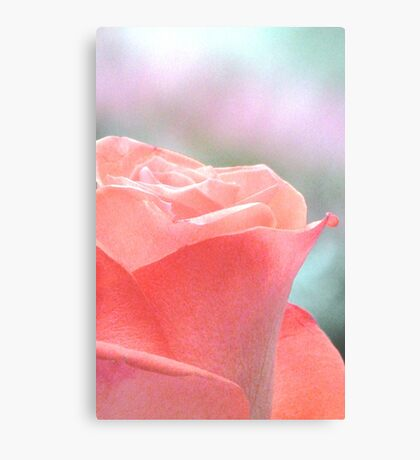 Don't Forget To Smell The Roses Canvas Print