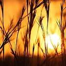 Sunset in the African bushveld by jozi1