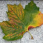 Leaf left on the pavemant by Arie Koene