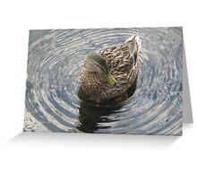 Sitting Duck Greeting Card