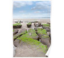 green mud banks at Beal beach Poster