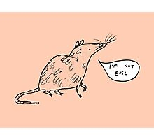 Rats Aren't Evil Photographic Print