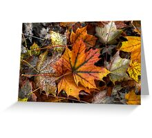 A Leaf Among Leaves ~ Leaves Fall Colors ~ Greeting Card