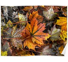 A Leaf Among Leaves ~ Leaves Fall Colors ~ Poster
