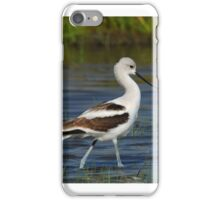 American Avocet iPhone Case/Skin