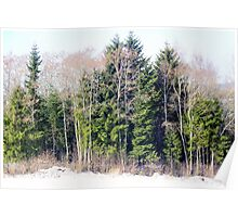 Evergreen and Deciduous Poster