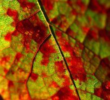 Fall Grape Leaf by Danielle Shields