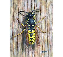 Acrylic painting, Wasp nature art Photographic Print