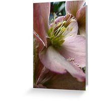 Petals and Poetry Greeting Card