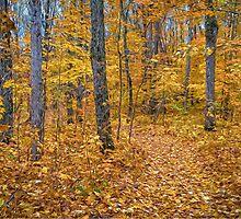 Golden Fall Colours by faczen