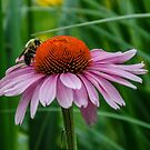 Springtime Bee's by d1373l