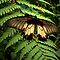 FERNS AND MOSSES AROUND THE WORLD - AUGUST AVATAR 2014 - MELLOW YELLOW