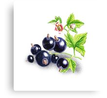 Blackcurrant Botanical Painting Canvas Print