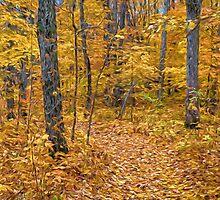 Golden Fall Colour by faczen
