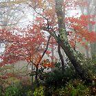 Foggy Red by Asoka