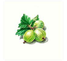 Gooseberry Bunch Art Print