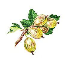 Sunkissed Gooseberries  by Irina Sztukowski