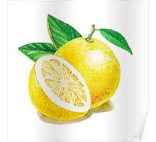 Yellow Grapefruit Poster