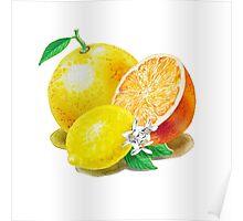 Grapefruit Orange Lemon Trio Poster