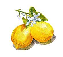 Lemons by Irina Sztukowski