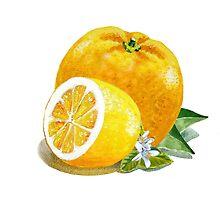Orange And Lemon by Irina Sztukowski