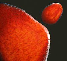 ebola plate glaze iv - photograph by Paul Davenport