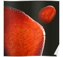 ebola plate glaze iv - photograph Poster