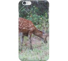 Sika Elk, Assateague iPhone Case/Skin