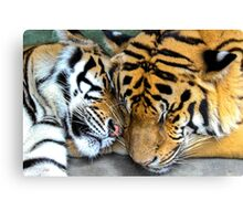 Cuddly Tigers Canvas Print